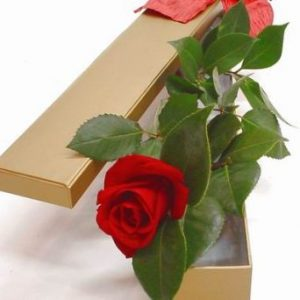 Single rose in box